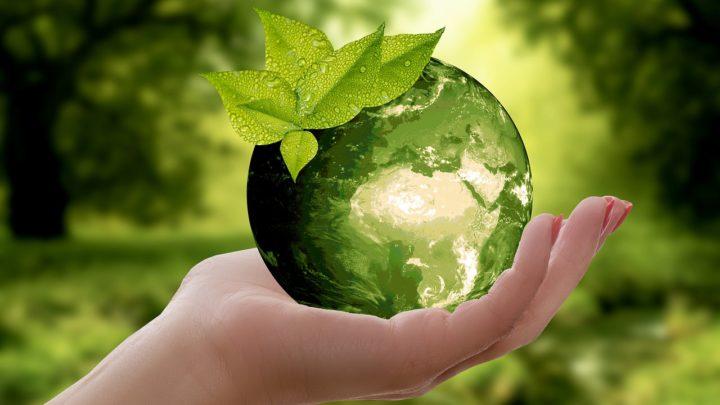 Polacy żyją ekologicznie, jeśli ich na to stać