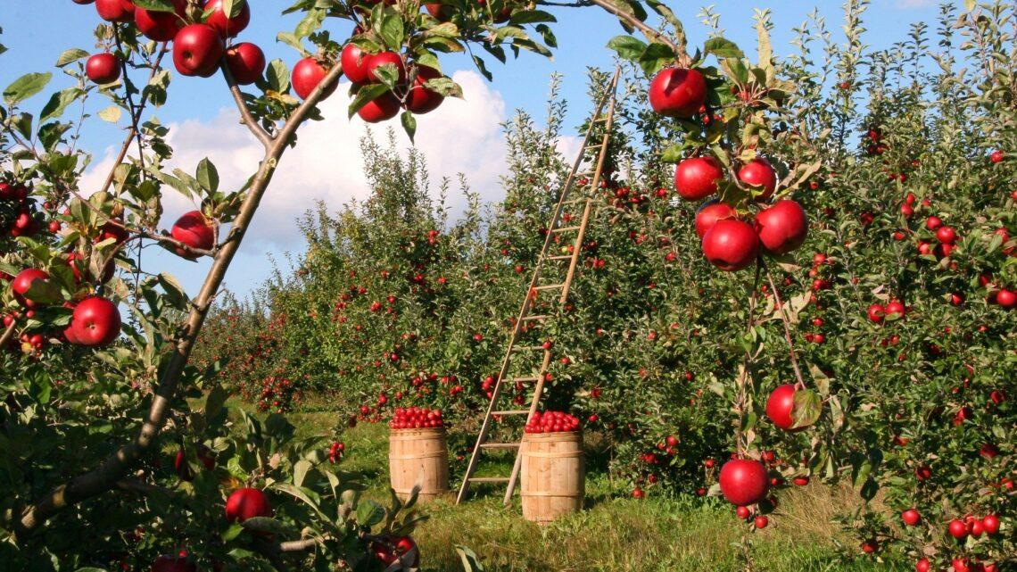 Polska – największy sad w Europie
