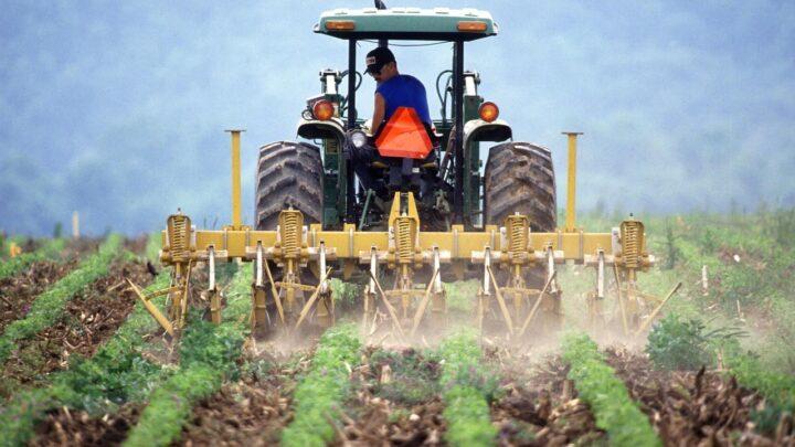 Zaliczki na dopłaty: ponad 3 mld zł na kontach rolników